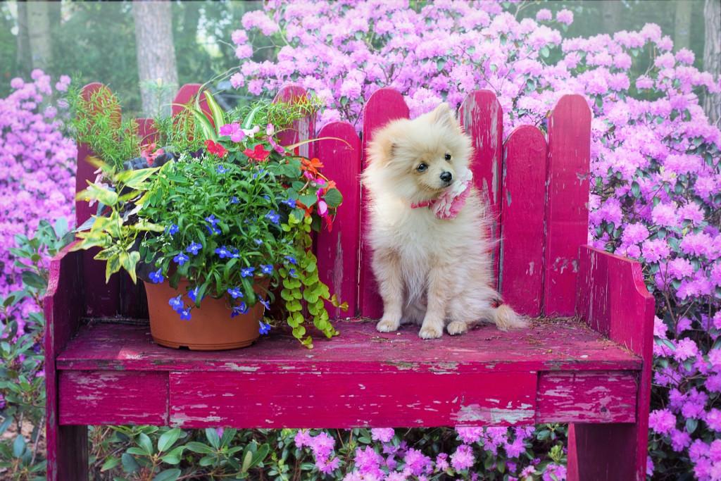 dog-3415990_1920